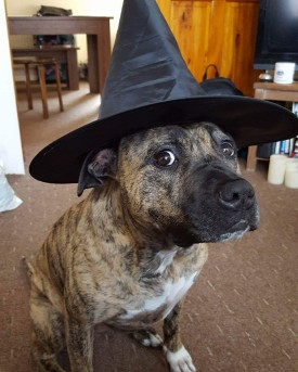 hat dog Lily